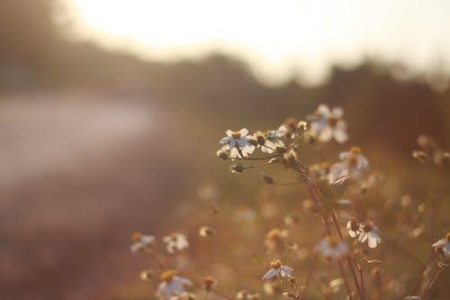 Kostenloses Stock Foto zu blühen, blumen, blüte, dämmerung