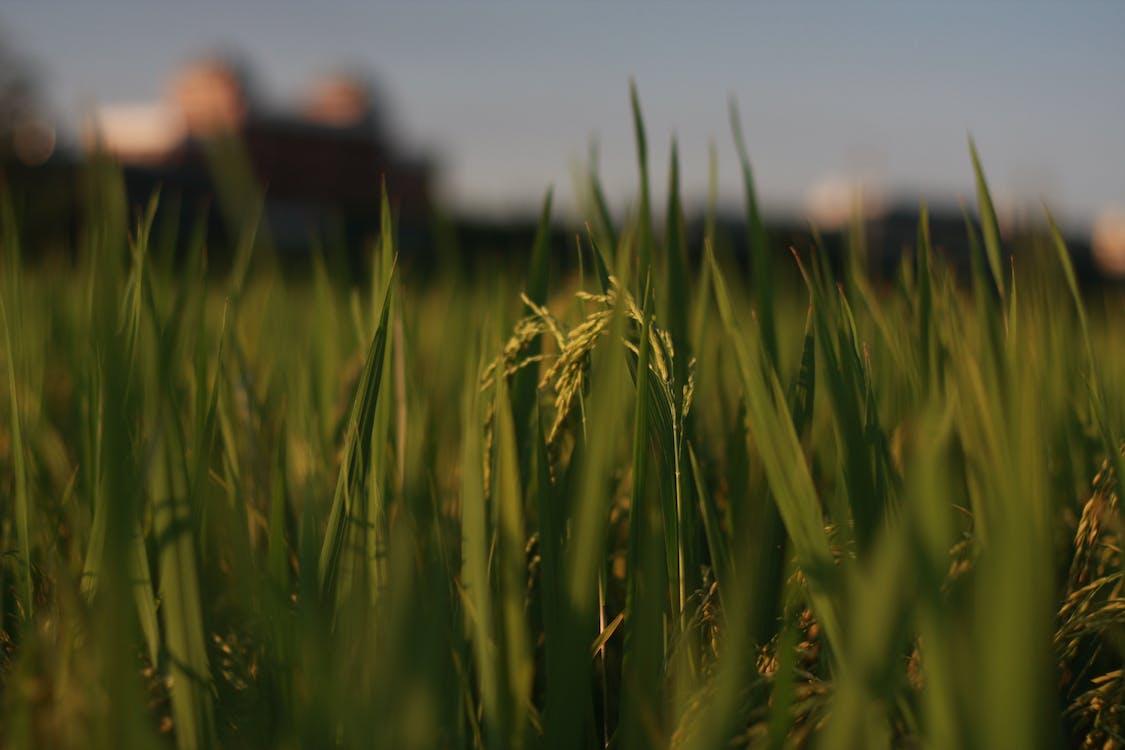 αγρόκτημα, ανάπτυξη, γεωργία
