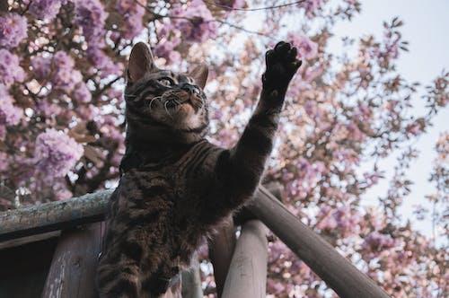 Ilmainen kuvapankkikuva tunnisteilla bengali, eläimet, kaunis, kirsikankukka