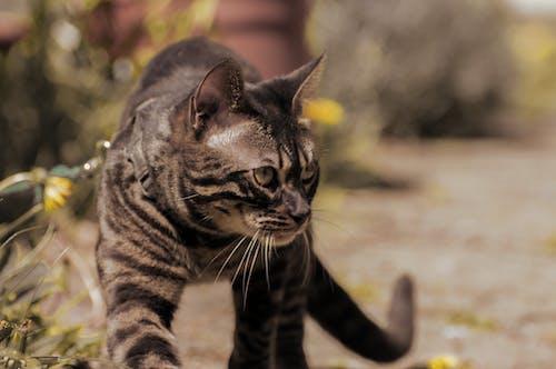 Free stock photo of #nature, cat, cat eye, cat face