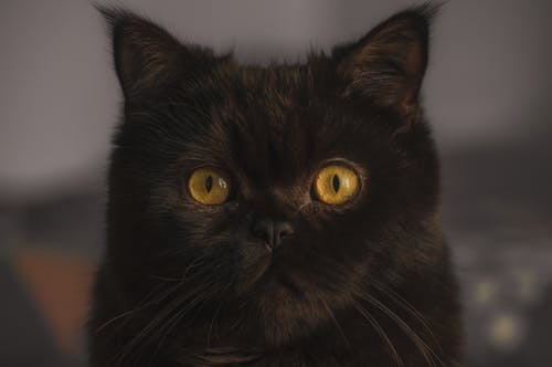 Ilmainen kuvapankkikuva tunnisteilla #keltainen, hyvännäköinen, katsominen, kauniit silmät