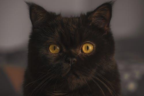 Free stock photo of #yellow, beautiful eyes, big eyes, black