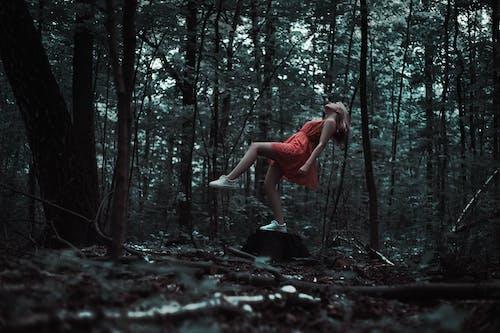 Безкоштовне стокове фото на тему «відпочинок, дерева, Деревина, жінка»