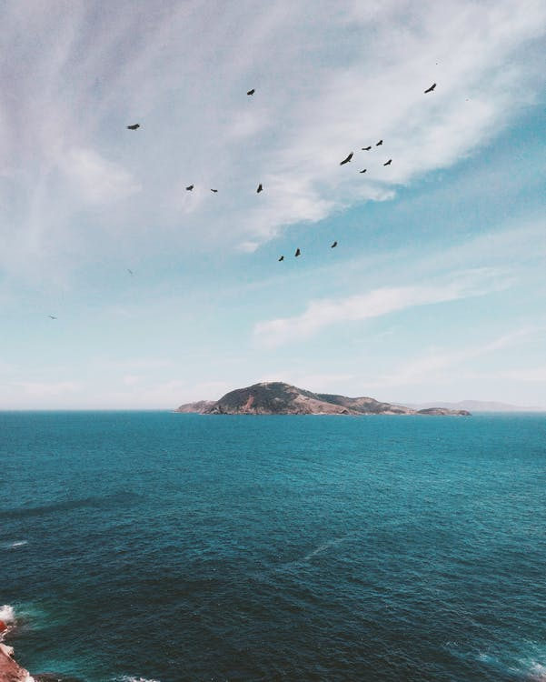 Flock of Birds Flying over Islet