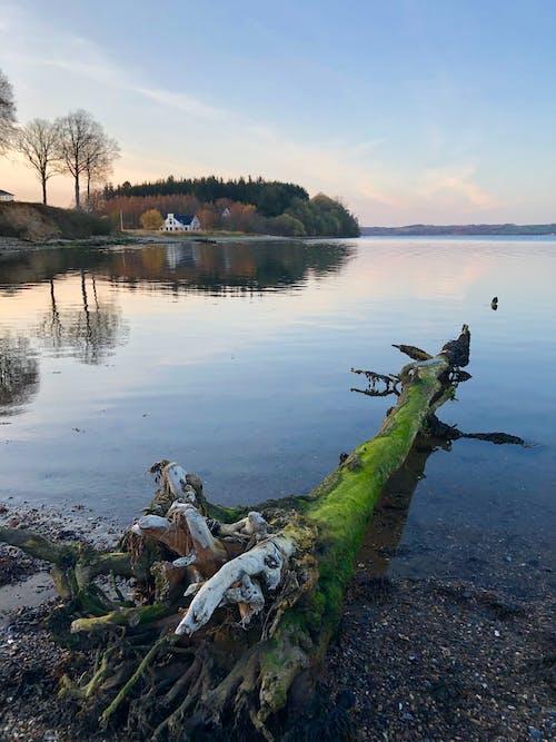 Безкоштовне стокове фото на тему «берег озера, блакитне небо, відображення, вода»