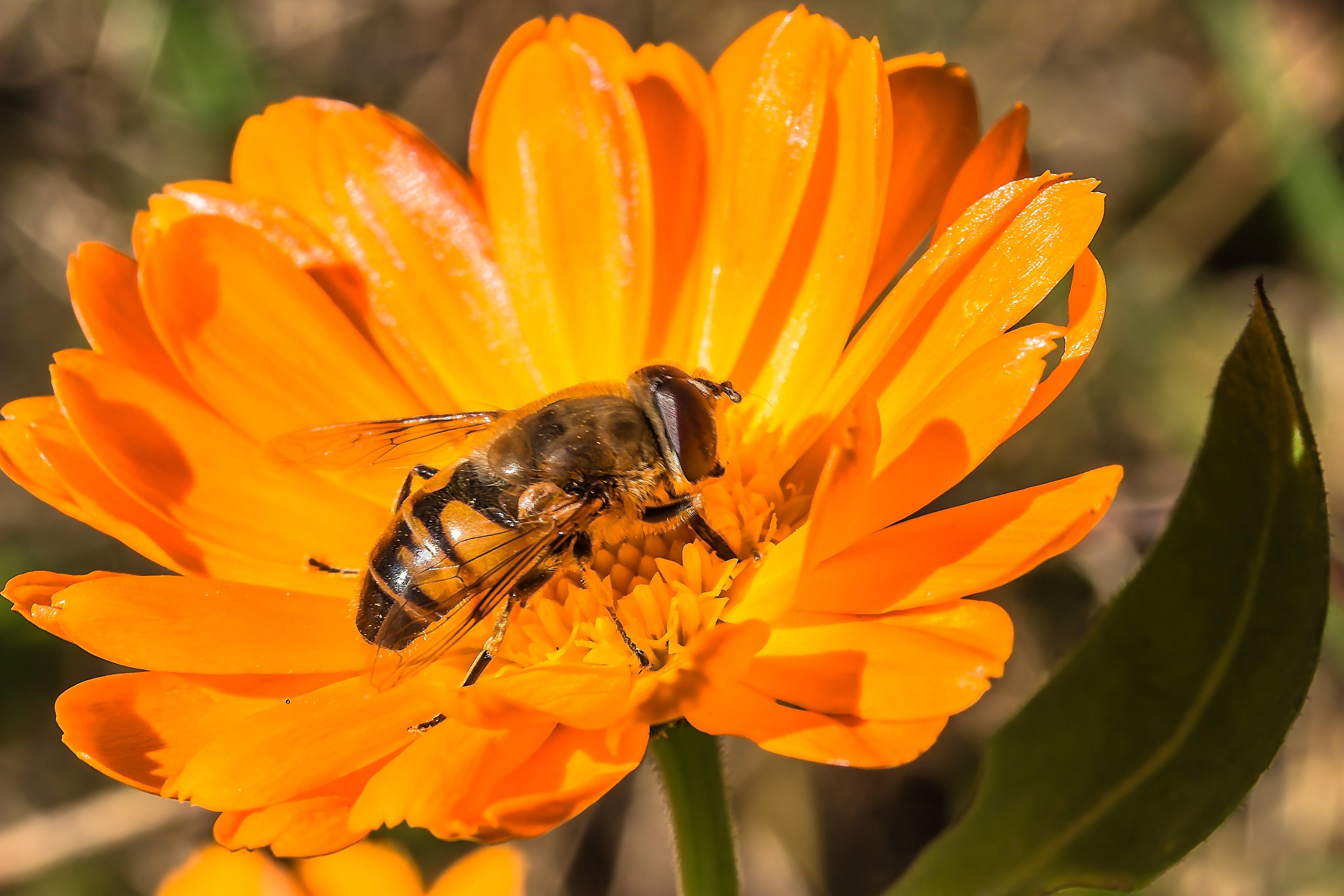 Free stock photo of nature, animal, flower, pollen