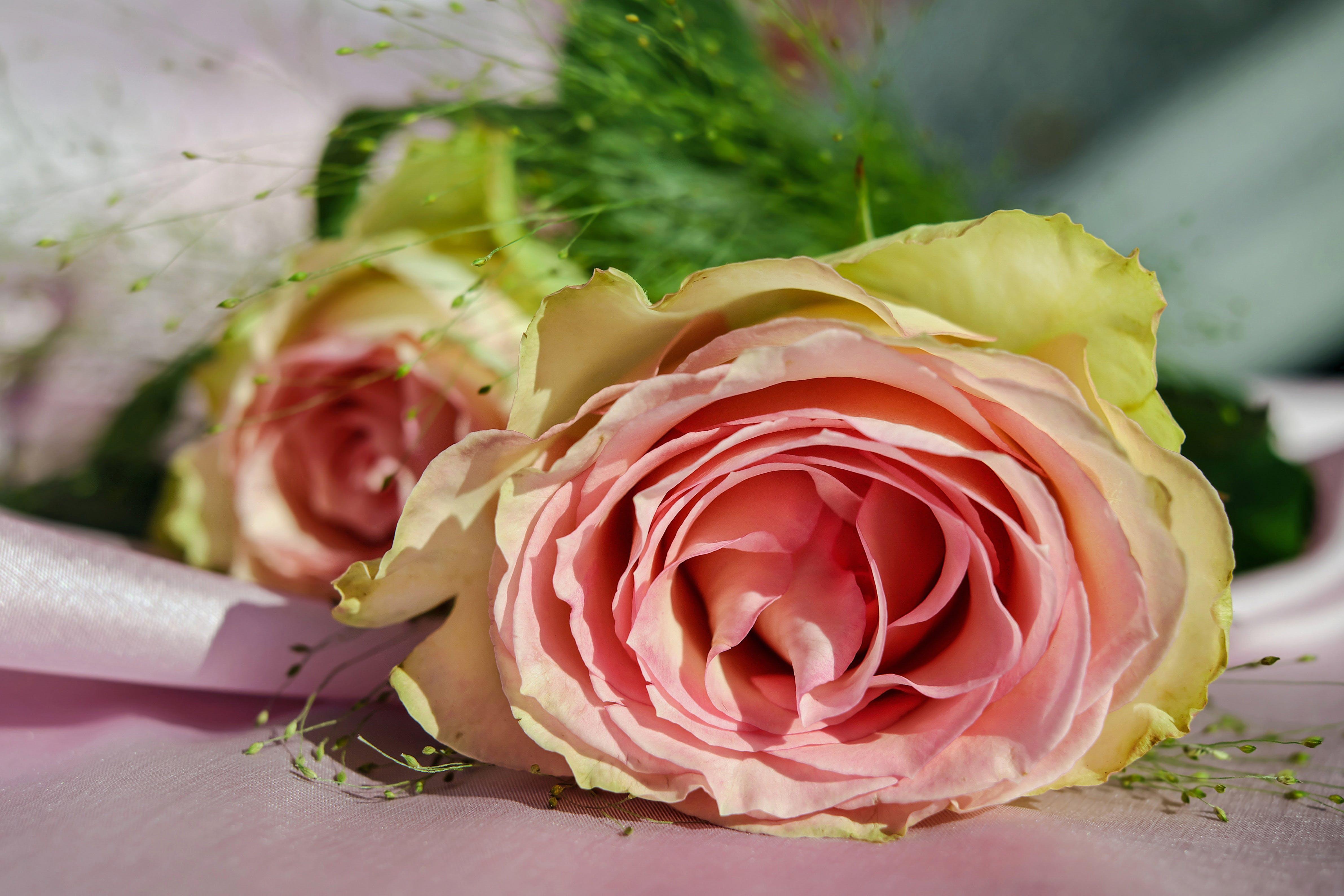 Free stock photo of romantic, flowers, plant, flower