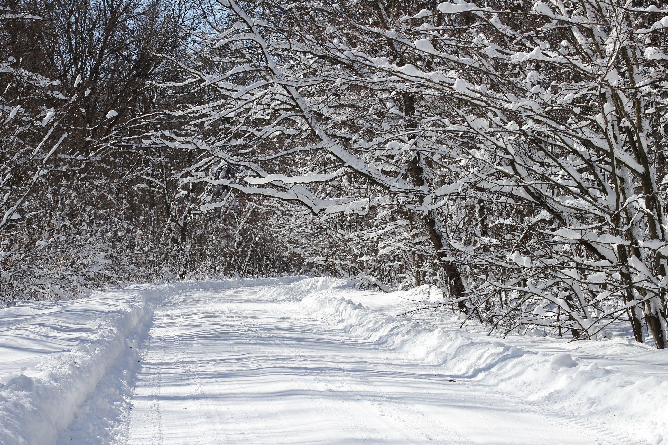 Photos gratuites de arbres, branches, forêt, froid