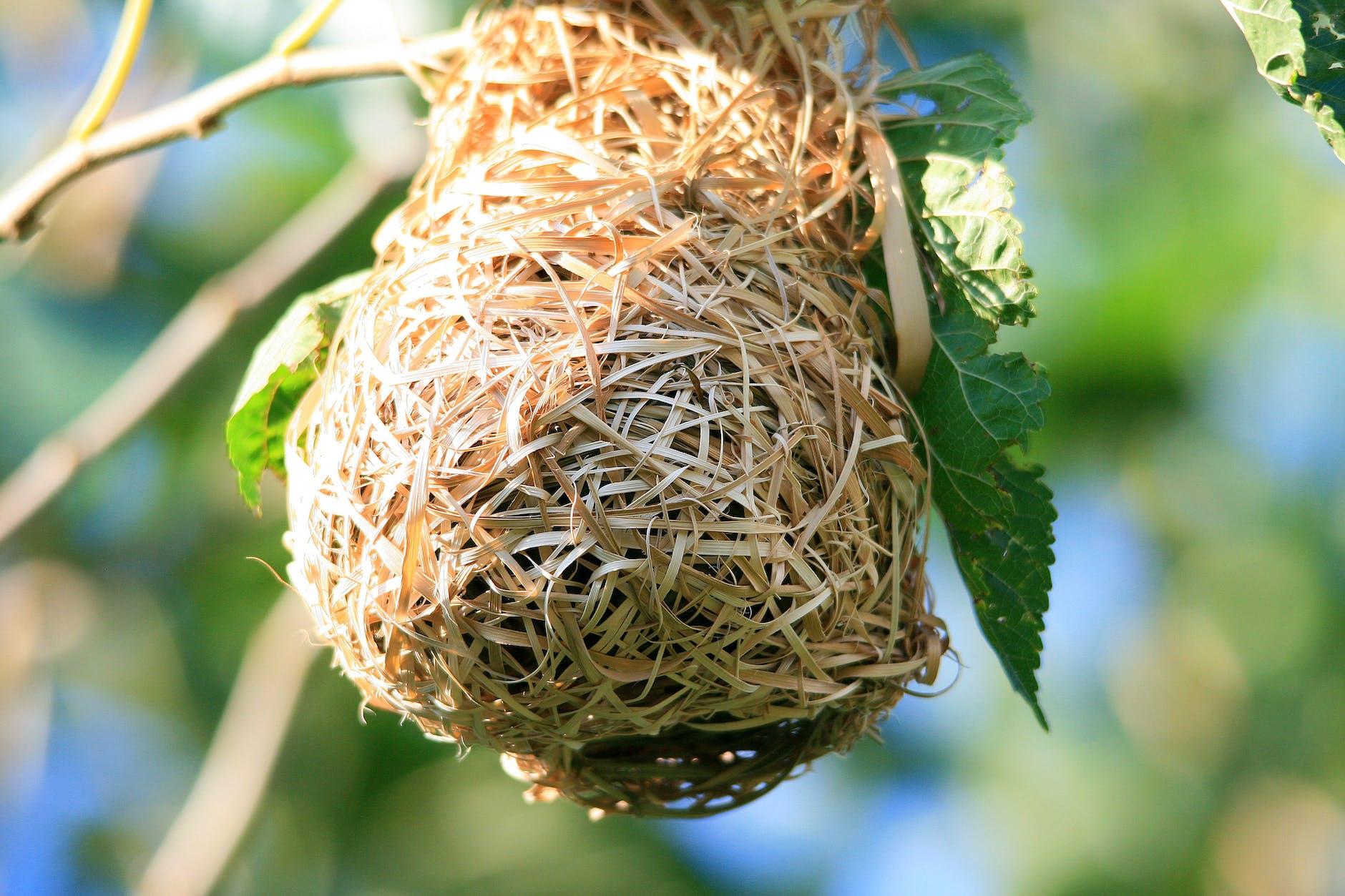 birds nest on a tree branch