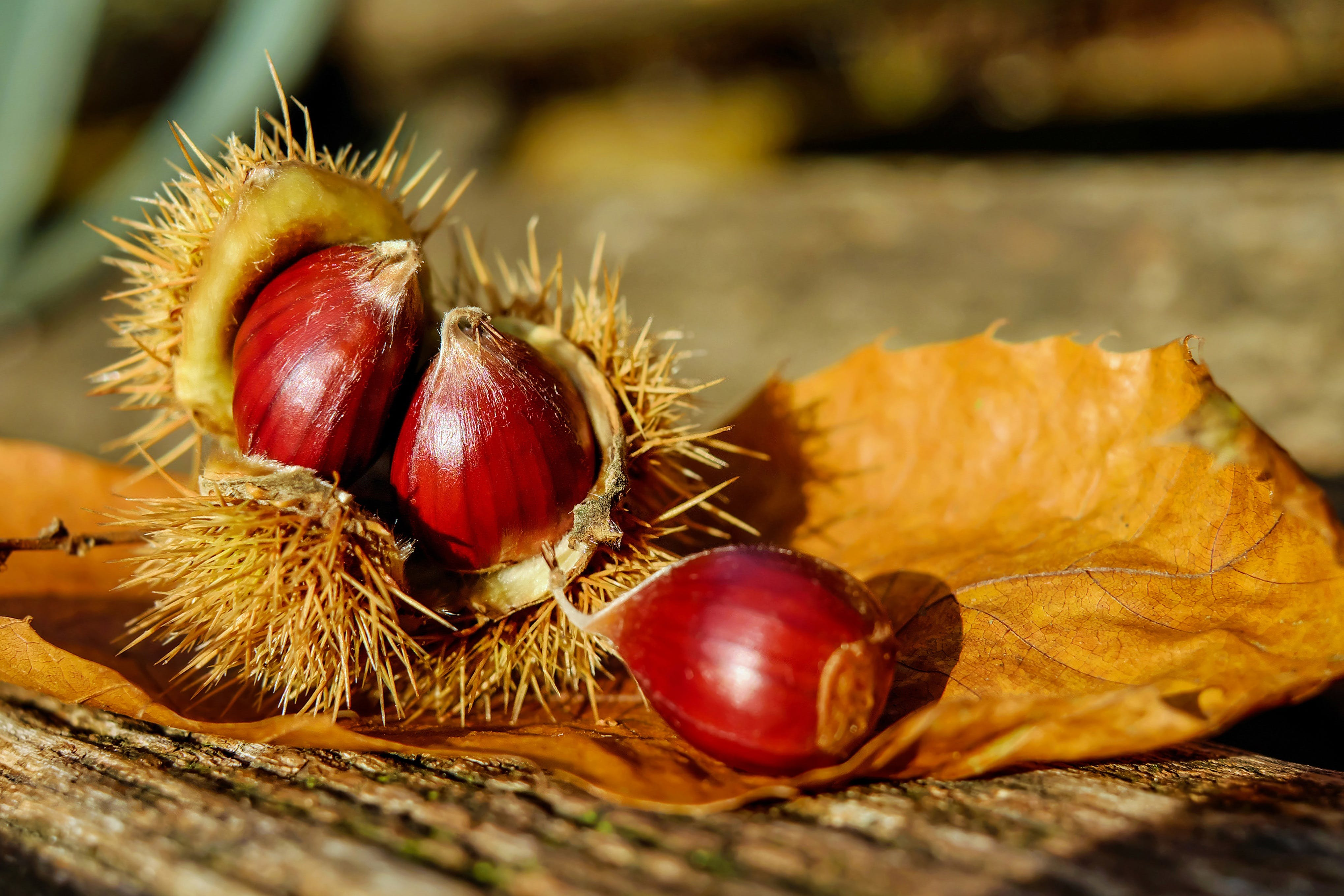 blurred background, chestnuts, close-up