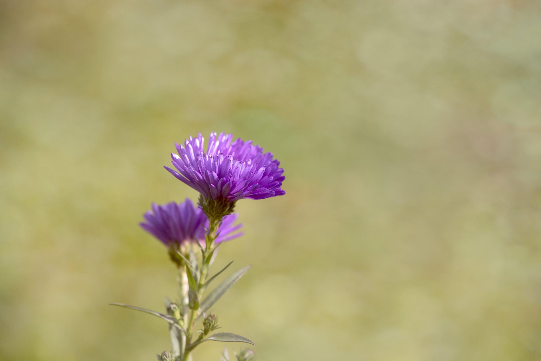 Purple Thistle Flower during Daytime