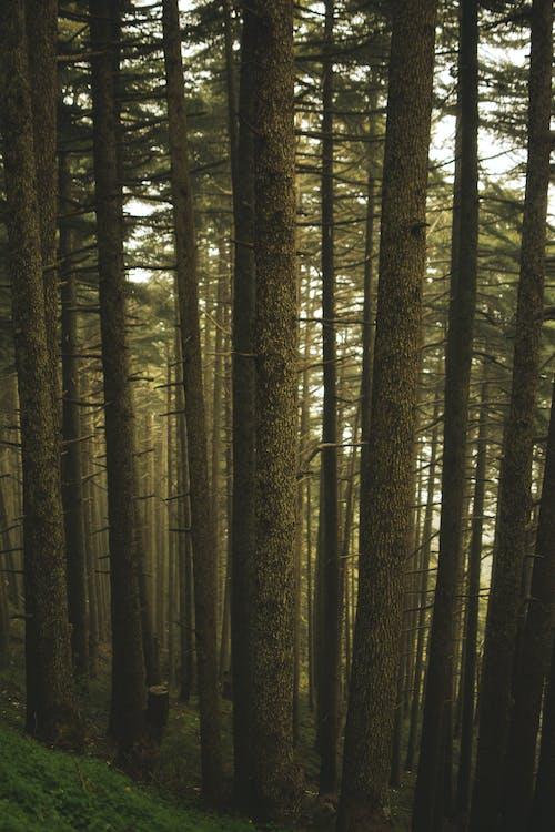 天性, 樹木, 樹林, 自然攝影 的 免费素材照片