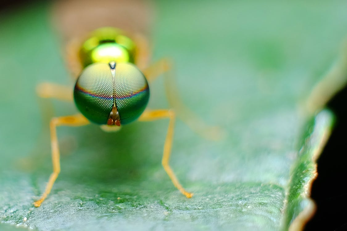 Brown Insect on Green Leafed Plant
