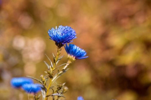 Closeup Photo of Blue Cluster Petaled Flower