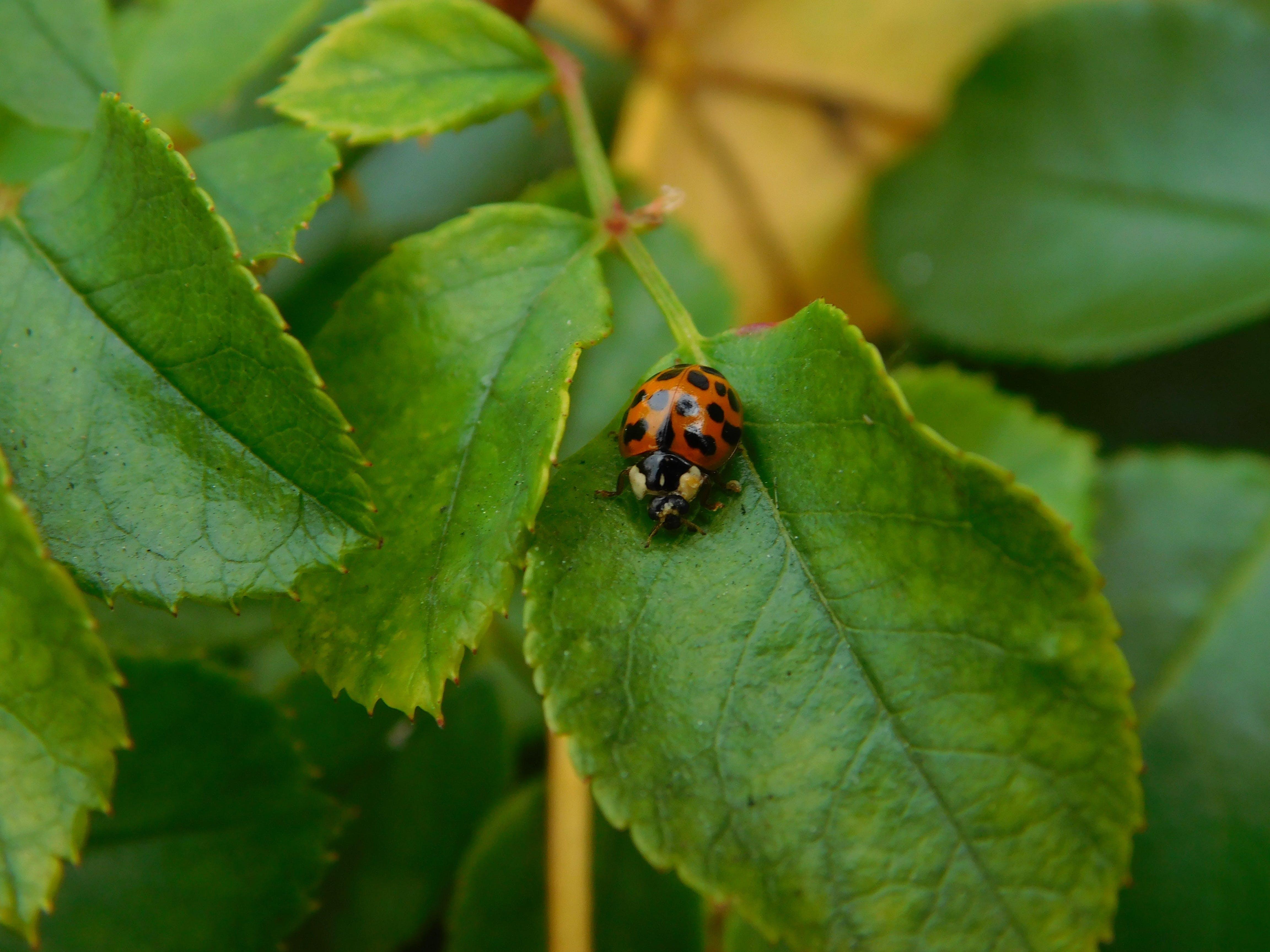 Red Ladybug on Leafed Plant
