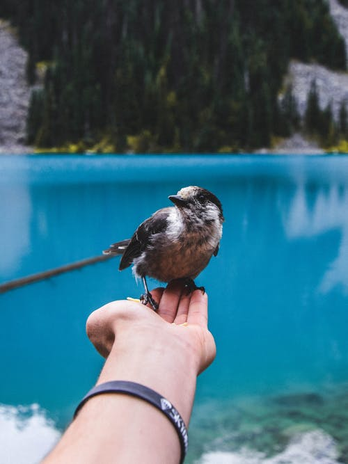 Bird Perched on Person's Hand