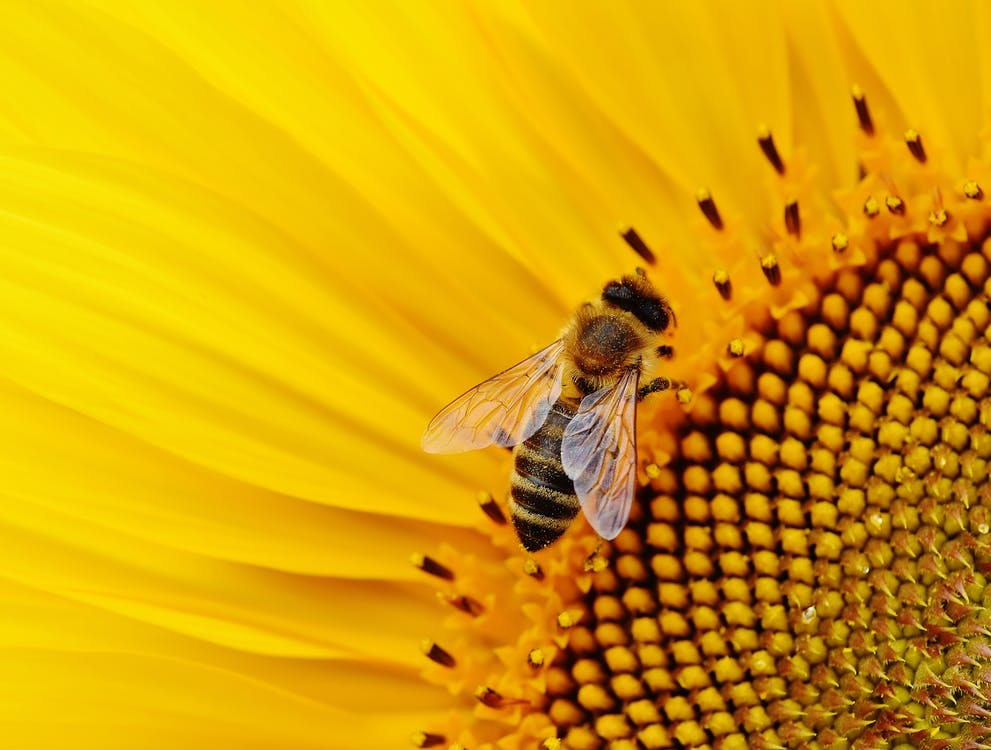 detailný záber, hmyz, kvet