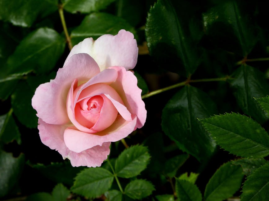 New free stock photo of love, garden, petals