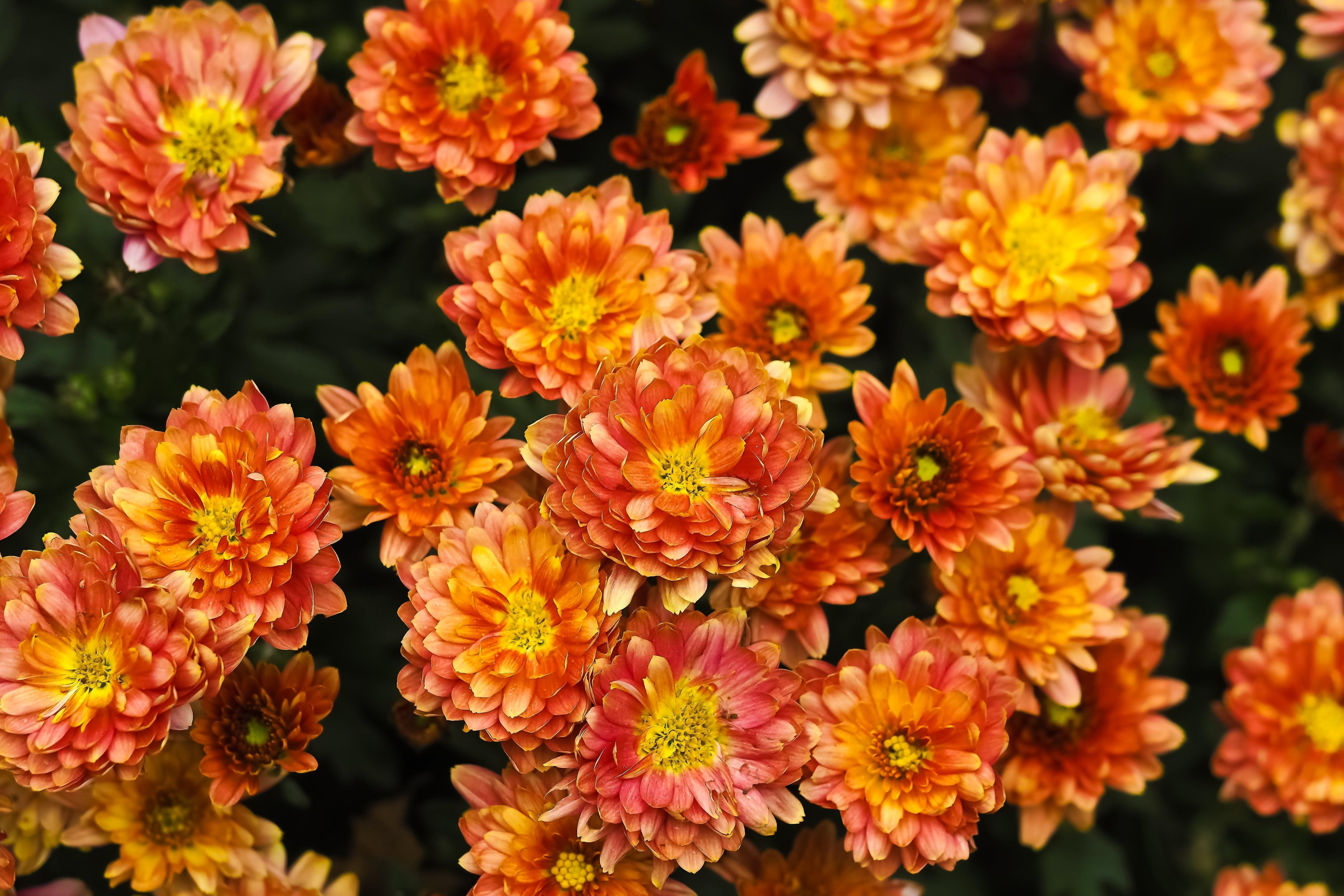 Free stock photo of nature, summer, garden, yellow