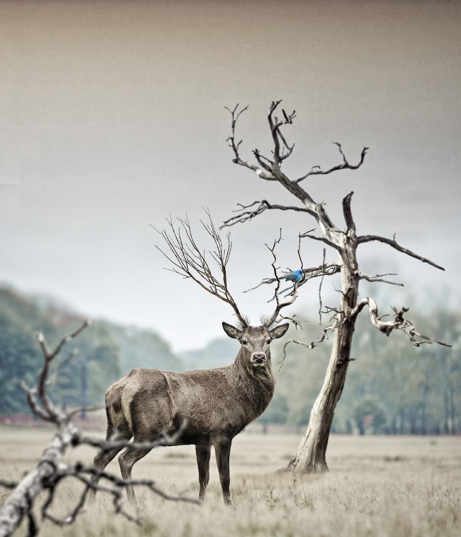 animal, antler, antlers