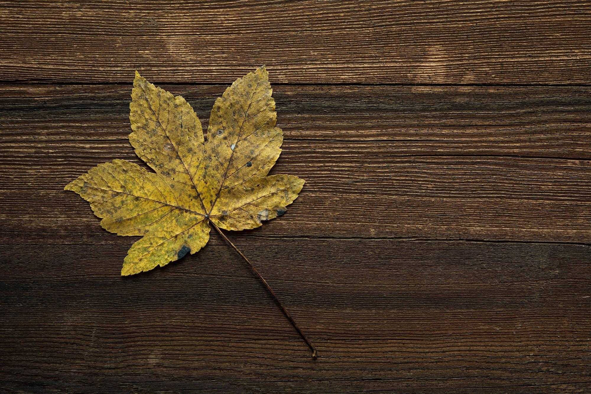 Brown Leaf on Brown Wooden Surface