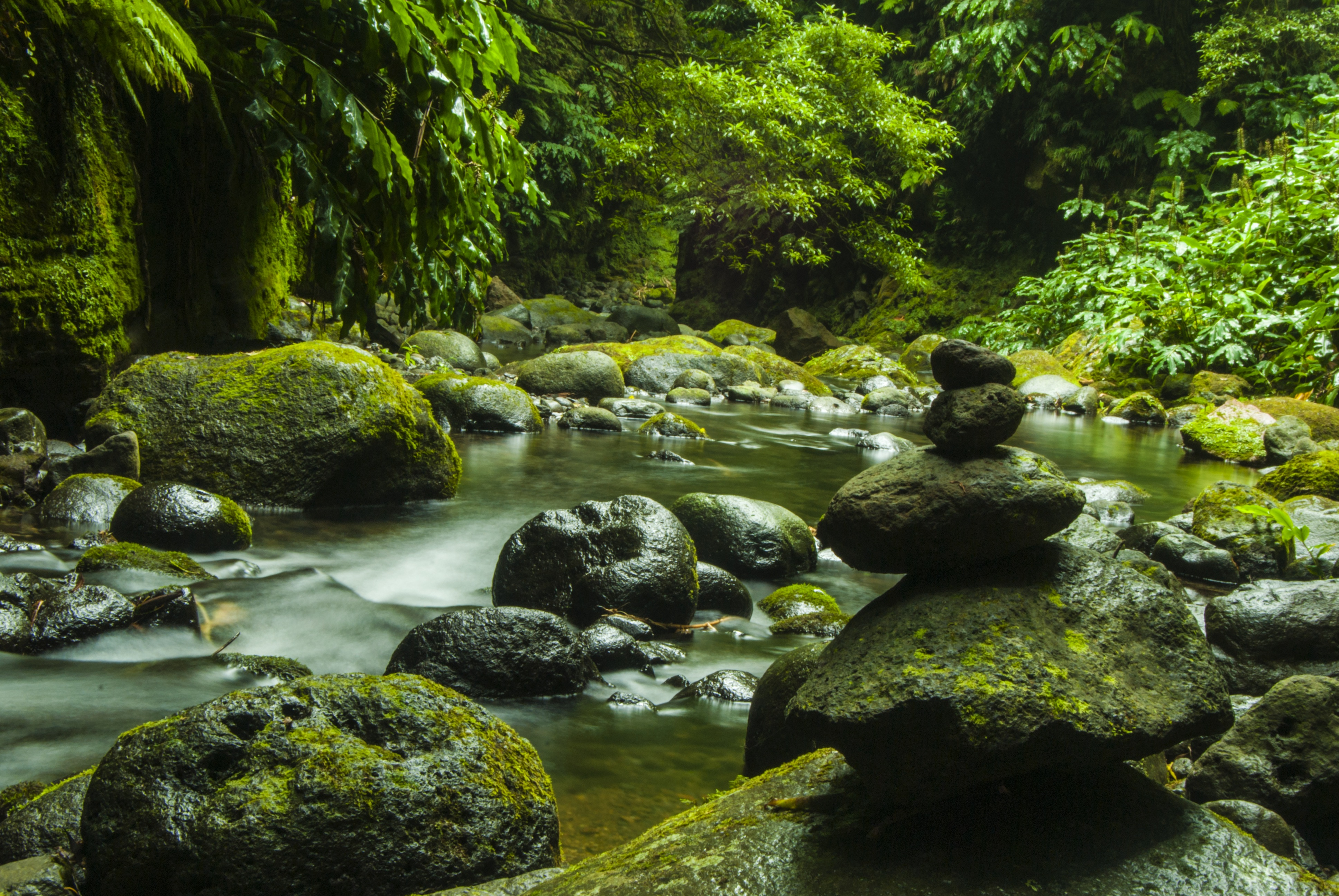 Pile of Rock in River Surrounded by Tree
