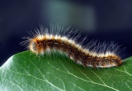 hairy, insect, macro