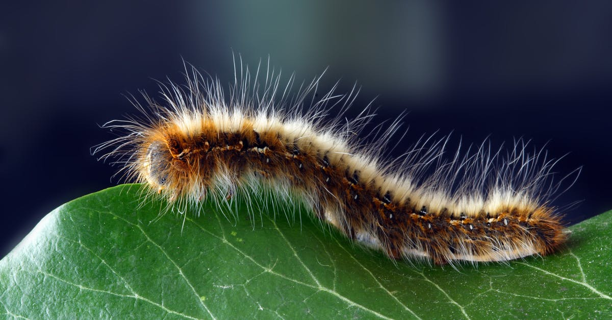 Hairy Caterpillar Pictures 69