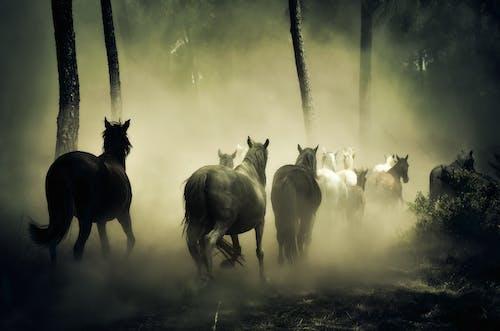 Foto d'estoc gratuïta de animals, bestiar, boira, bosc