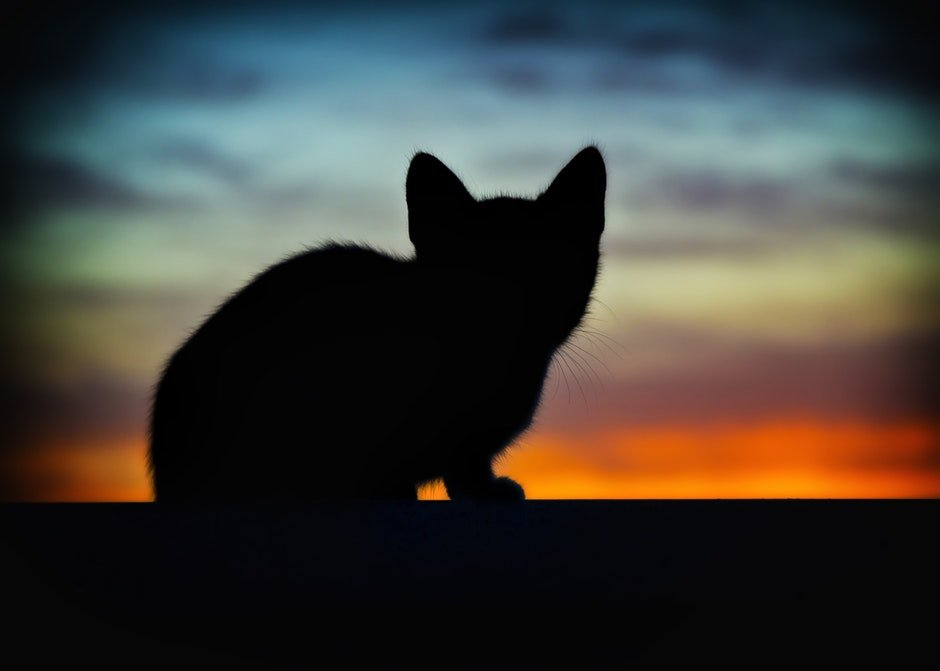 animal, art, backlight