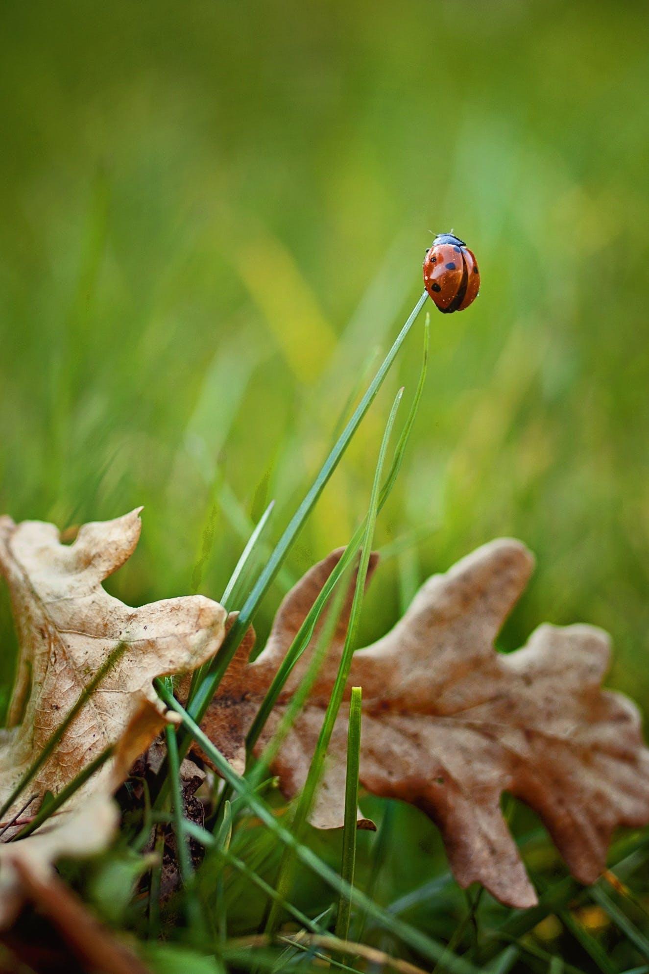 Gratis lagerfoto af close-up, farverig, græs, grøn