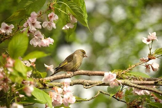 Free stock photo of road, nature, bird, flowers
