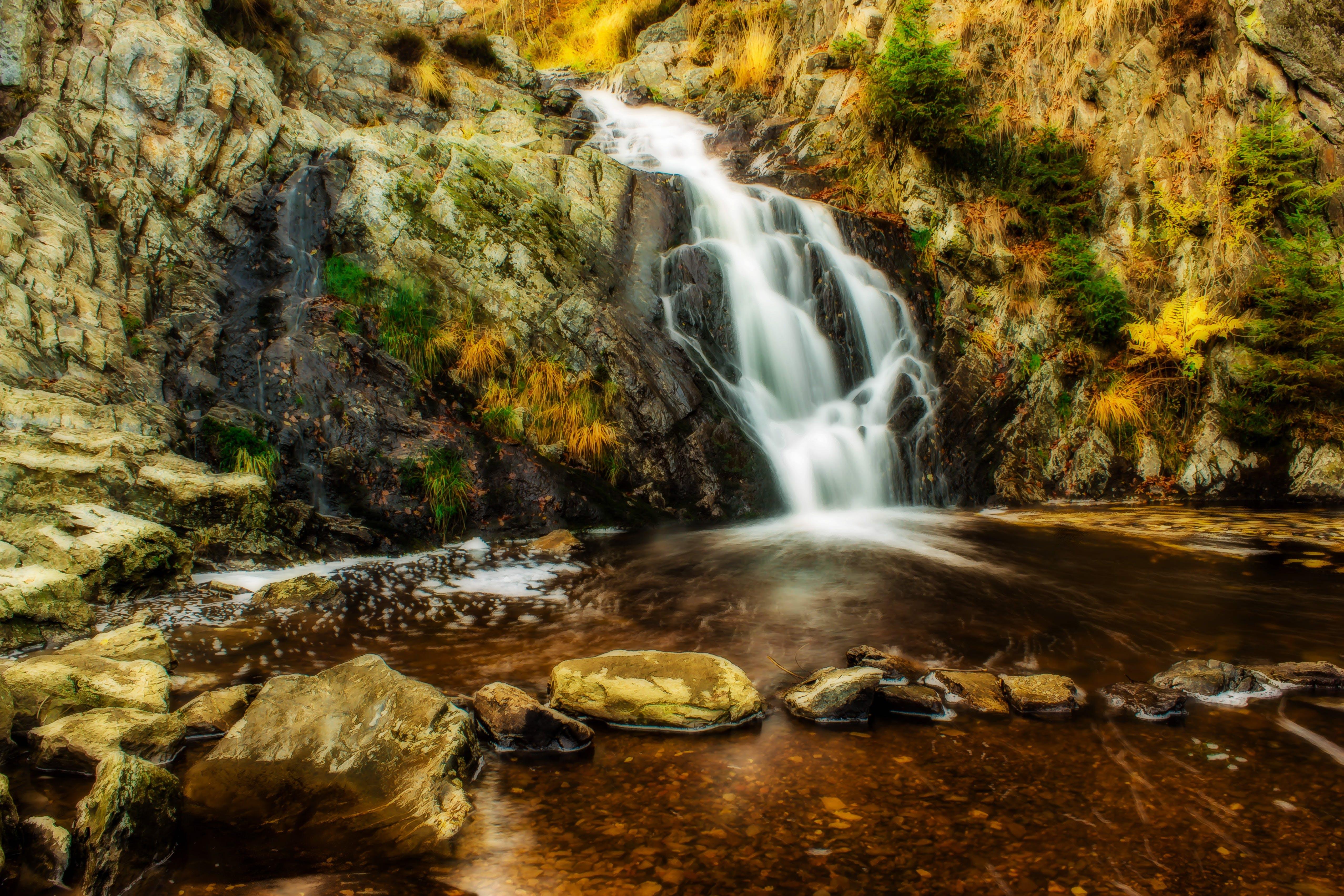 คลังภาพถ่ายฟรี ของ กระแสน้ำ, การเคลื่อนไหว, งดงาม, ต้นไม้
