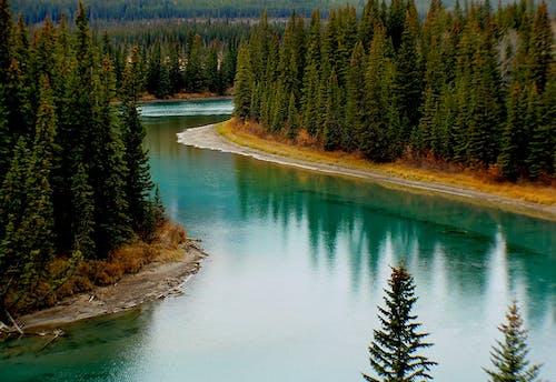 Foto d'estoc gratuïta de aigua, arbres, arquejar riu, bosc