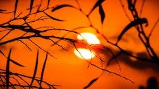 nature, sunset, evening