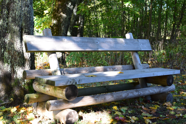 Kostnadsfri bild av bänk, gräs, park, sittplats