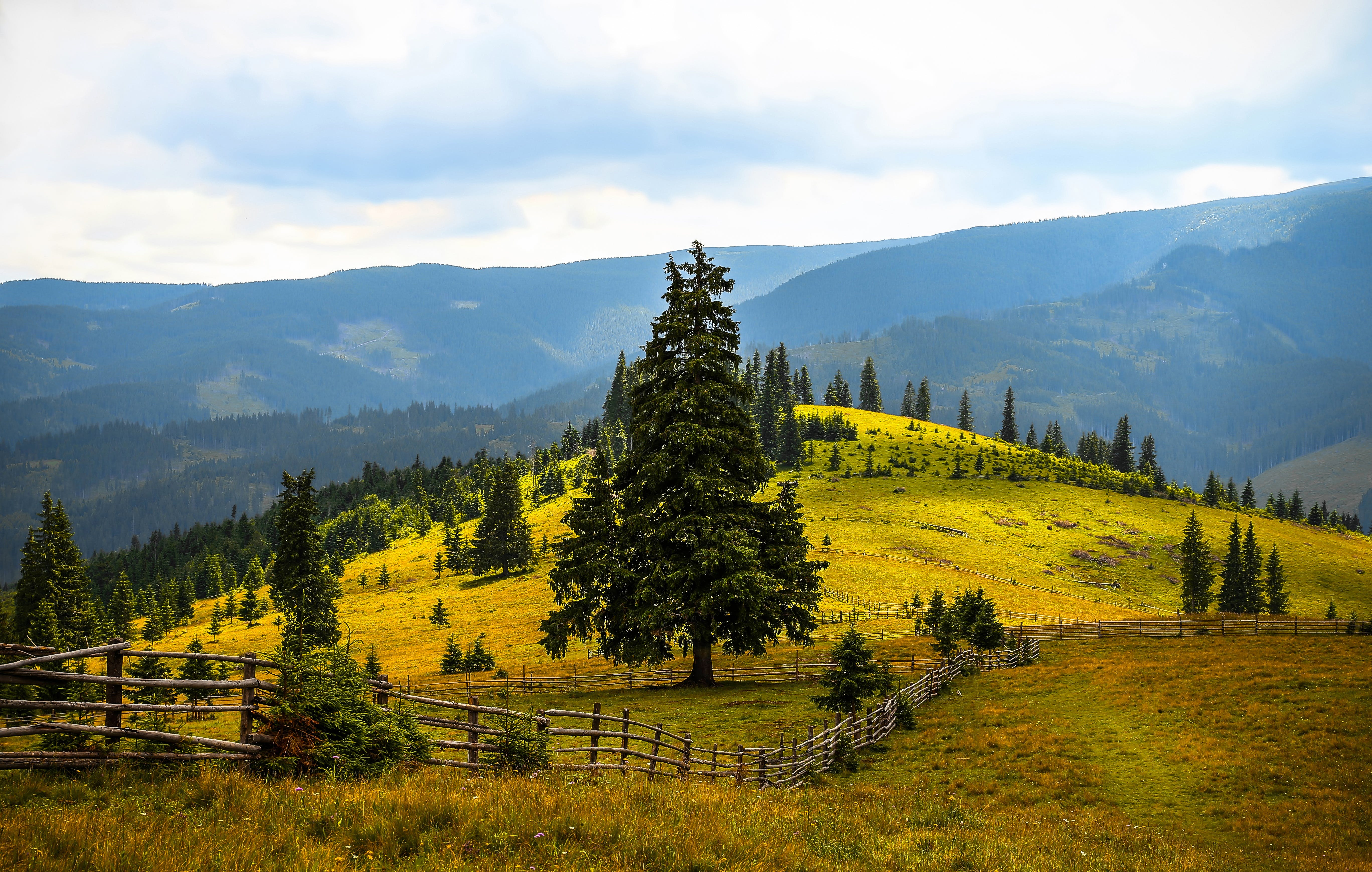 Pine Trees Field Near Mountains during Daytime