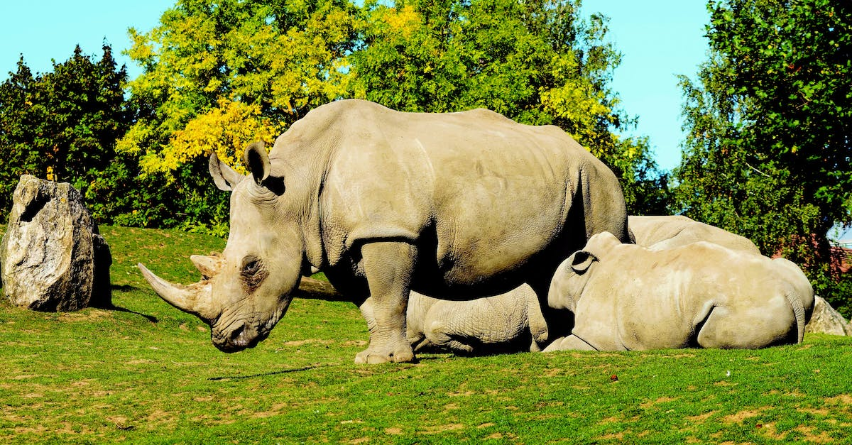 an introduction to the nature of rhinoceros and their endangerment 3 ' royal court theatre, 2007 synopsis of the play act 1 rhinoceros begins in a small town square where jean, a refined young man, meets his semi-alcoholic and fully apathetic friend, berenger, for.