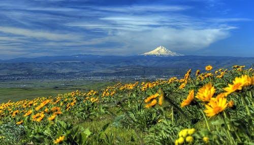 Základová fotografie zdarma na téma flóra, hora, hřiště, krajina
