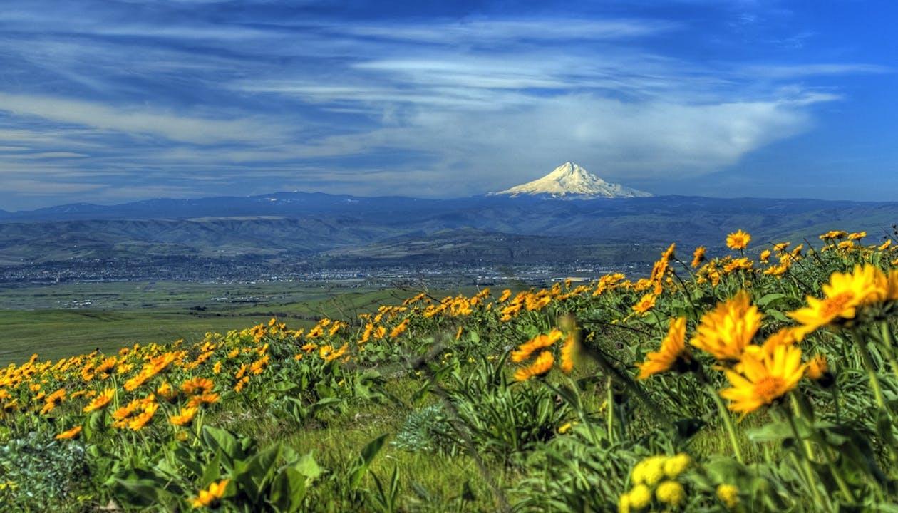 berg, bloemen, flora