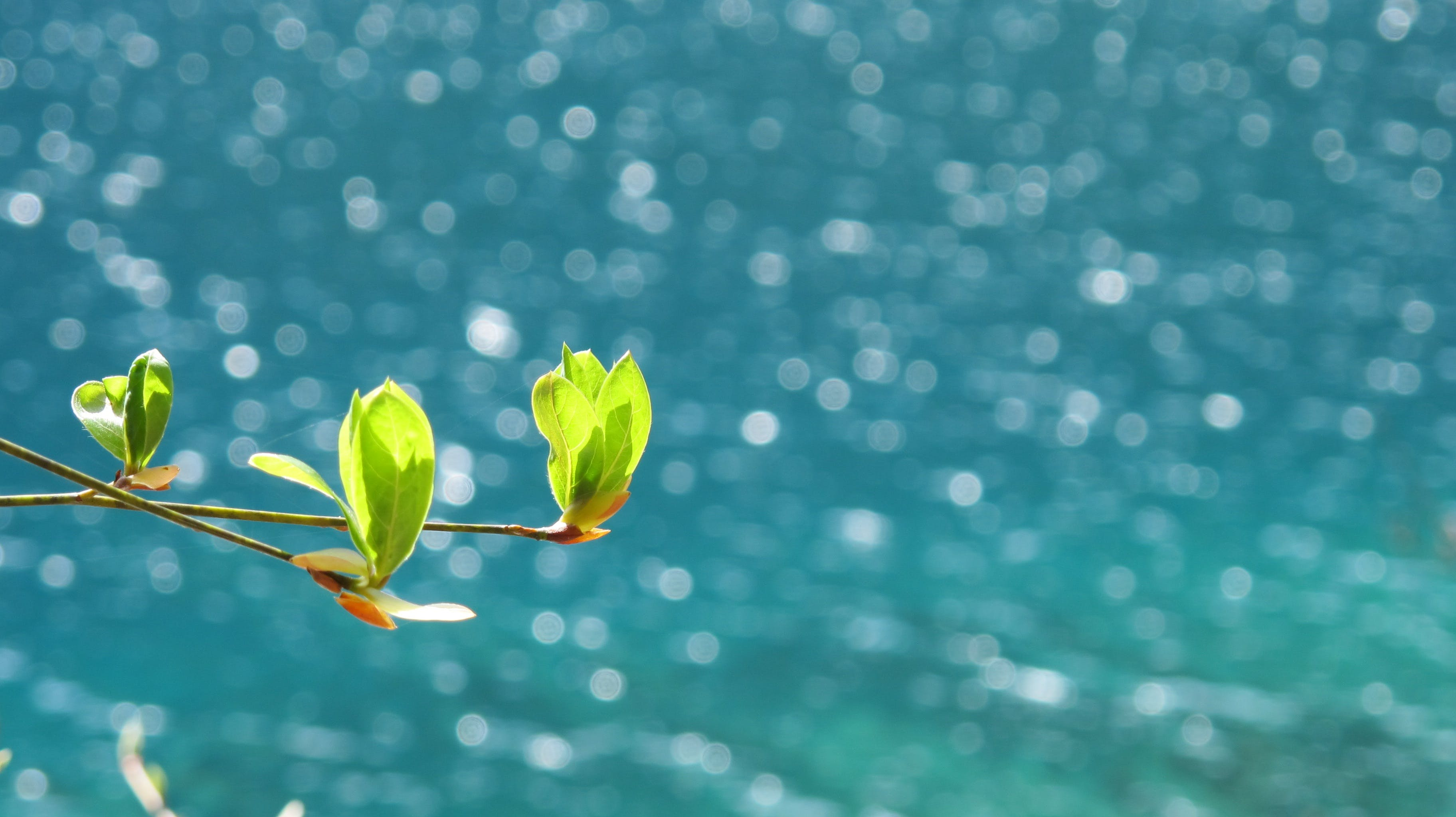 Free stock photo of sea, spring, tree, young