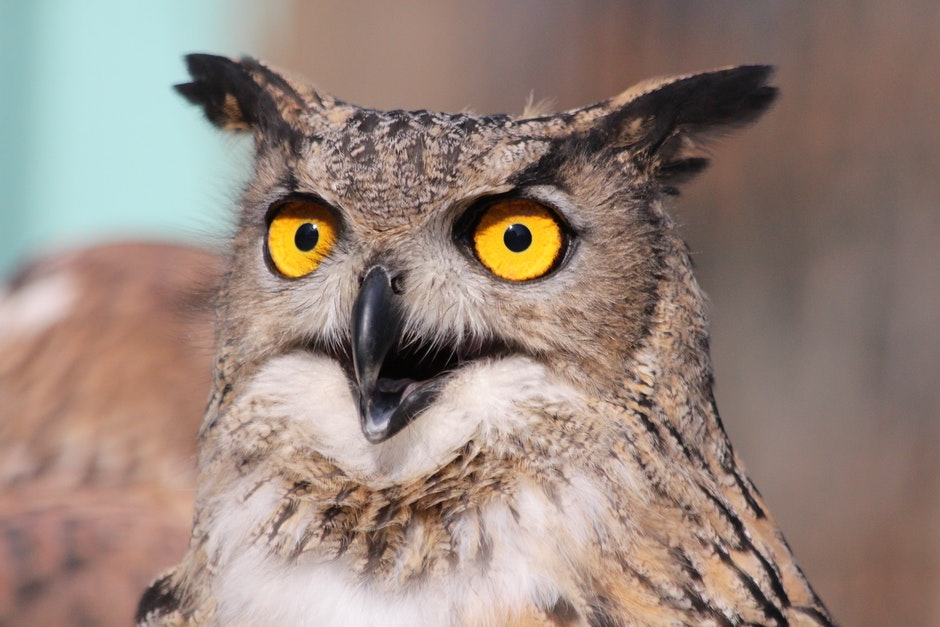 Close Up Photography of African Owl