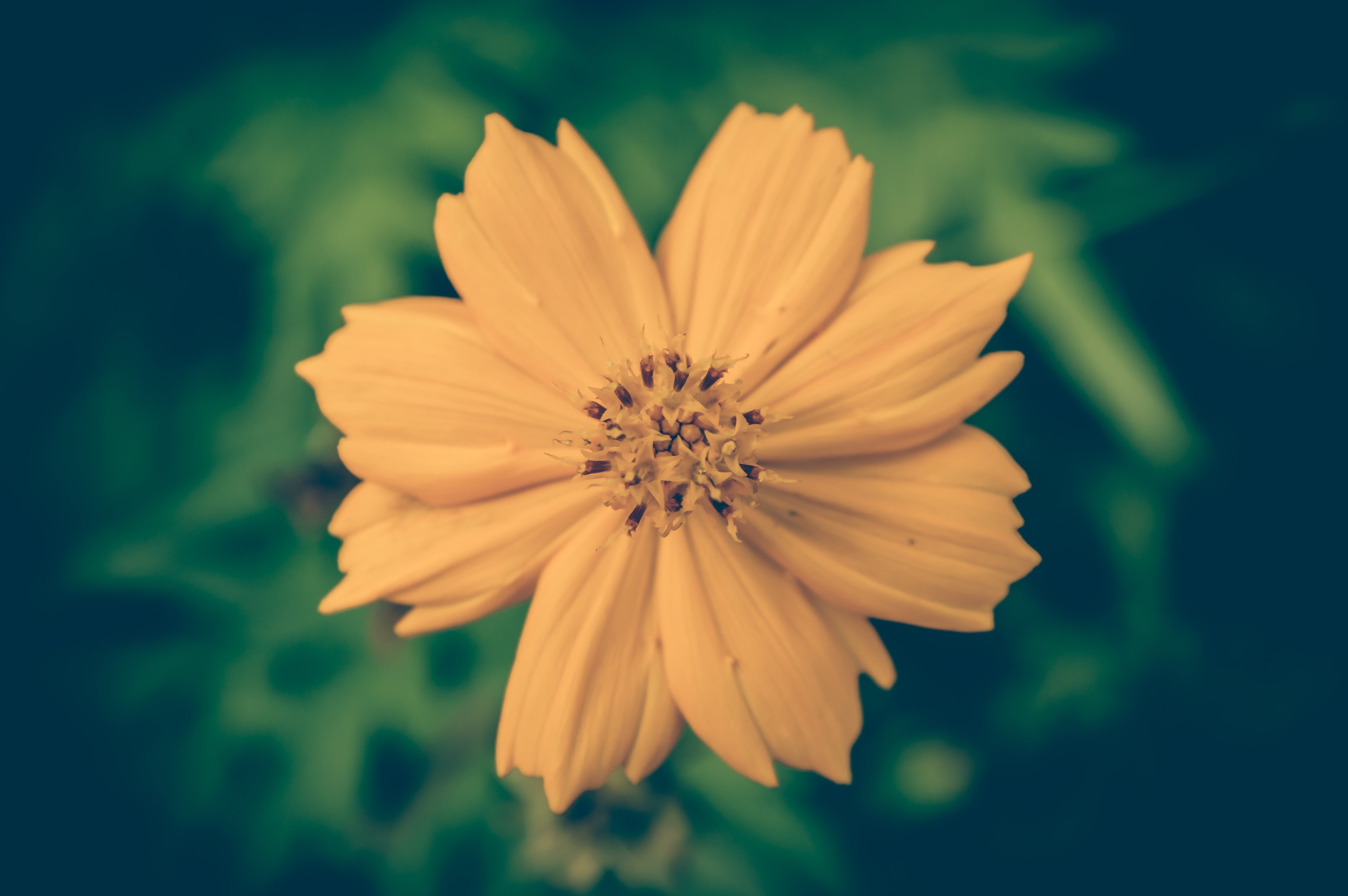 Selective Focus Photography of Yellow Petal Flower