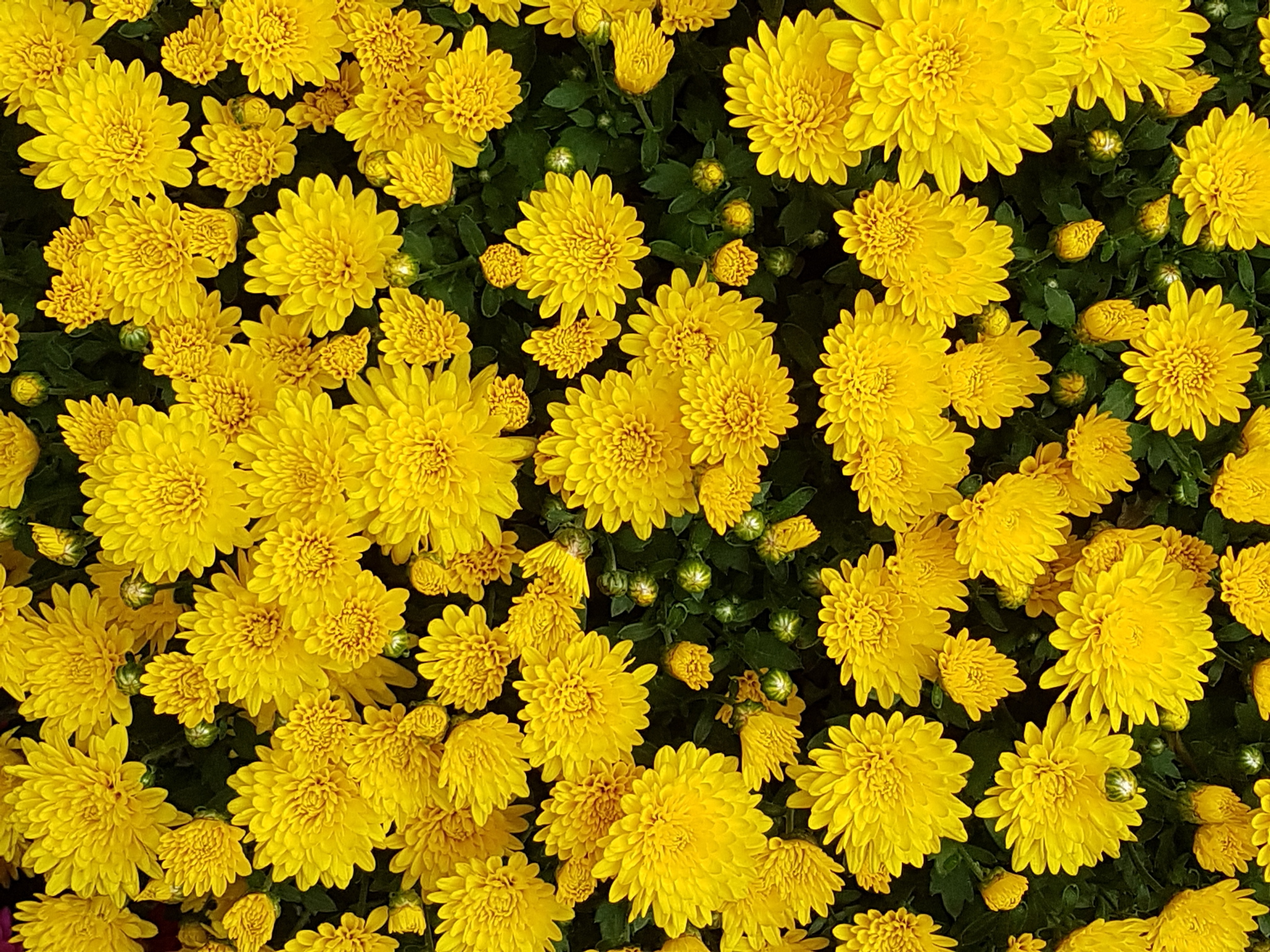 Unduh 600 Koleksi Background Kuning Gambar Gratis Terbaru