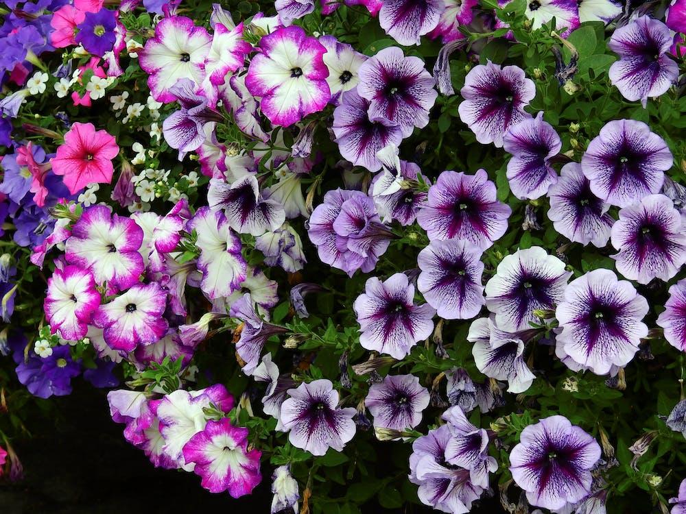 bonito, botánico, brillante