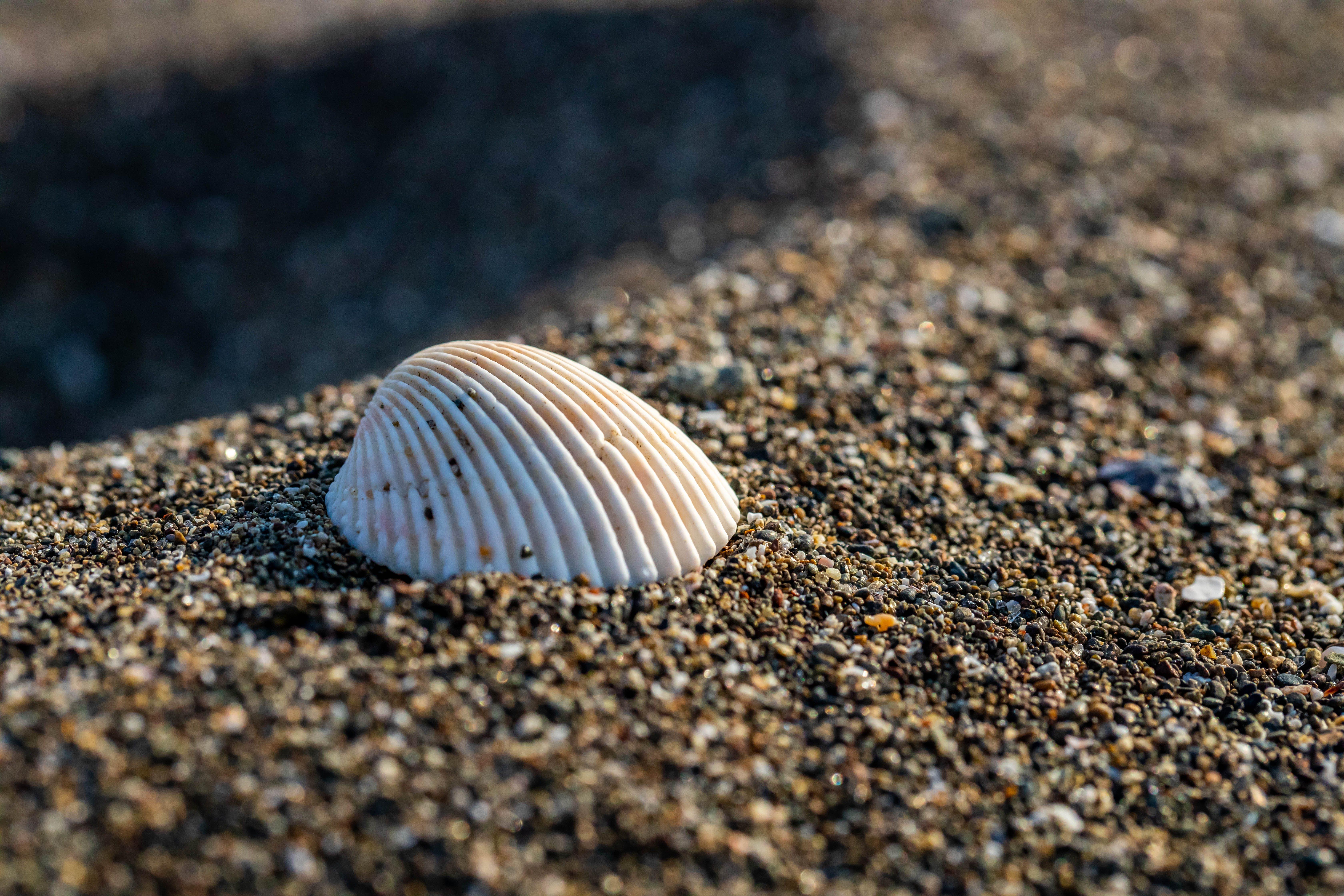 Kostenloses Stock Foto zu makrofotografie, sand, schale, strand
