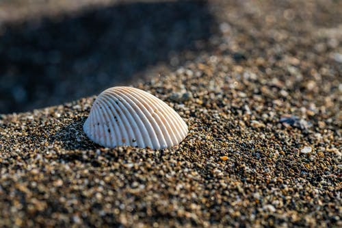 Foto d'estoc gratuïta de closca, fotografia macro, platja, sorra