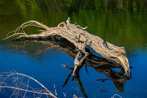 Foto d'estoc gratuïta de arbre, desembocadura del riu, platja