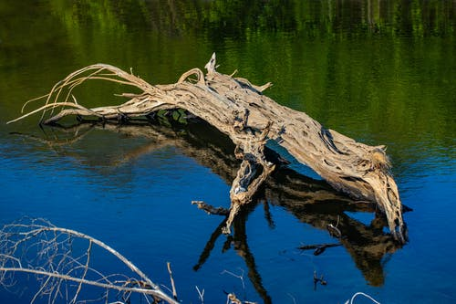 Gratis stockfoto met boom, riviermonding, strand