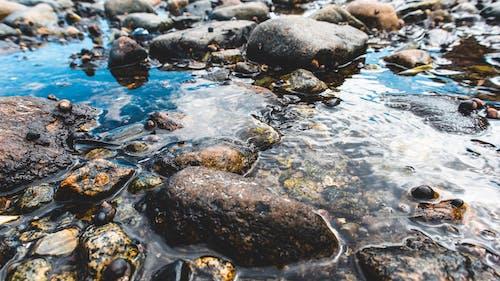 Gratis arkivbilde med hav, hdr, liten elv, vann